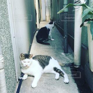 路地に座っている猫の写真・画像素材[1041688]