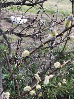 春の芽吹きの写真・画像素材[1085284]