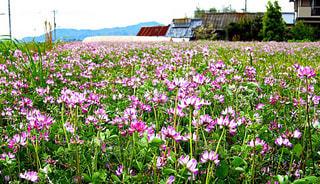 花のある風景の写真・画像素材[1041876]