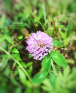 近くの花のアップの写真・画像素材[1183654]
