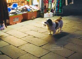 歩道の上を行く犬の写真・画像素材[1042033]