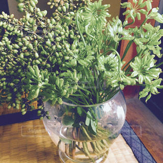 花瓶の花束の写真・画像素材[1042967]