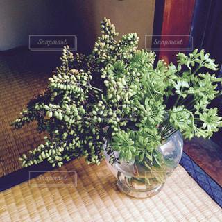 グリーン花の花瓶の写真・画像素材[1042968]