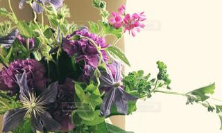 クレマチスの花束の写真・画像素材[1042969]