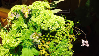 green bouquetの写真・画像素材[1043328]