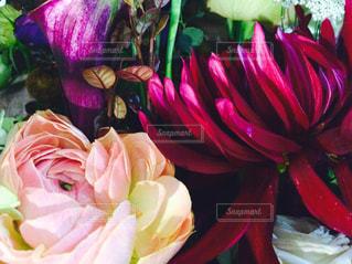 シックな色合いの花々の写真・画像素材[1044451]