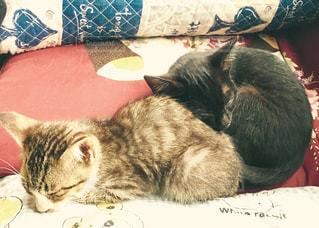 眠り子猫の写真・画像素材[1044489]