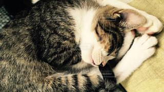 ぽかぽかお昼寝で幸せな夢を見るの写真・画像素材[1044490]