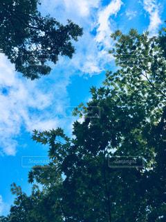 青空DAYの写真・画像素材[1048633]