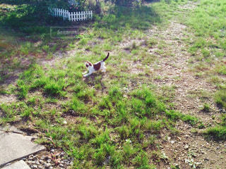 草の中を駆け回る子猫の姿の写真・画像素材[1049693]