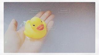 お風呂でひよこの写真・画像素材[1041797]