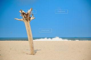 砂浜の流木の写真・画像素材[1293858]