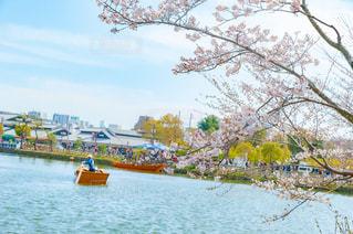 和船と桜の写真・画像素材[2105946]