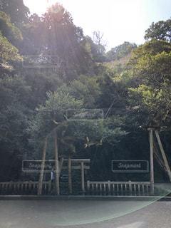 鹿島神宮の写真・画像素材[1056088]