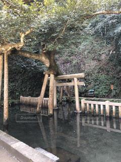 鹿島神宮の写真・画像素材[1056100]