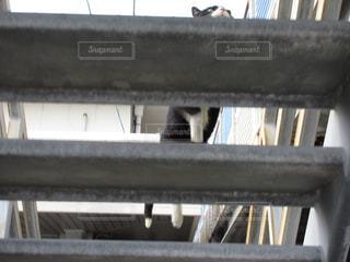 階段を登る猫の写真・画像素材[1048662]
