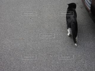 外を歩く猫の後ろ姿の写真・画像素材[1048663]