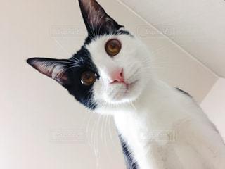 見下ろす猫の写真・画像素材[1058674]