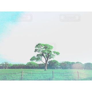 大きな一本の木の写真・画像素材[1058722]