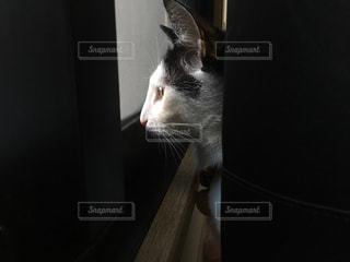 窓の外を見る猫の写真・画像素材[1065103]