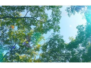 癒しの木々の写真・画像素材[1067677]