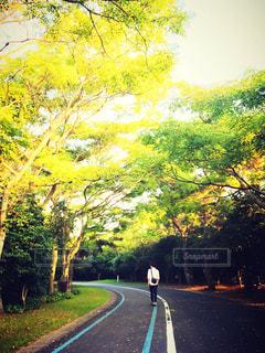 自然の中を散歩する男性 - No.1069649