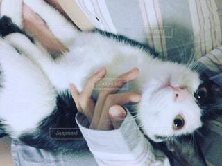 猫を抱く人の写真・画像素材[1076482]