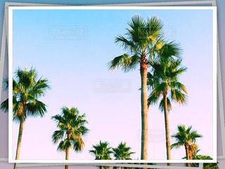 ヤシの木の写真・画像素材[1076483]