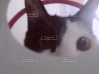 こちらを覗く猫の写真・画像素材[1076523]