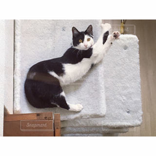 のび〜〜〜カメラに気付いた猫の写真・画像素材[1095662]