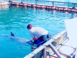 イルカと男性の写真・画像素材[1120474]