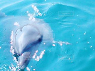 海を泳ぐイルカの写真・画像素材[1120484]