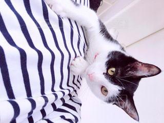 人と猫の写真・画像素材[1127306]