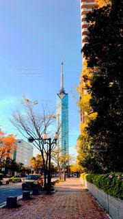 福岡タワーへ続く道の写真・画像素材[1133431]