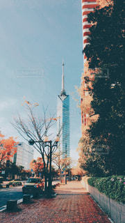 福岡タワーが見える道の写真・画像素材[1133738]
