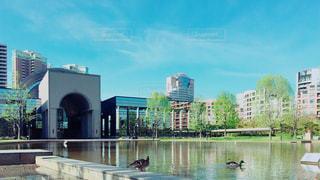 福岡市博物館前の池の写真・画像素材[1134814]