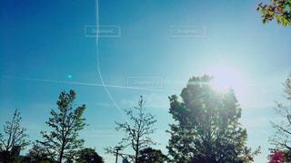 飛行機雲と木々の写真・画像素材[1135155]