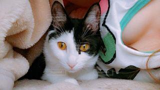 添い寝する猫の写真・画像素材[1149041]