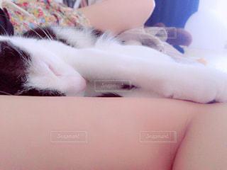 ベッドの上で横になっている猫の写真・画像素材[1149046]