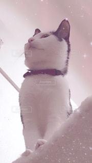 猫の写真・画像素材[1154144]