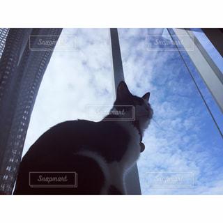窓辺の猫の写真・画像素材[1154158]