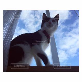 窓辺にいる猫の写真・画像素材[1154164]