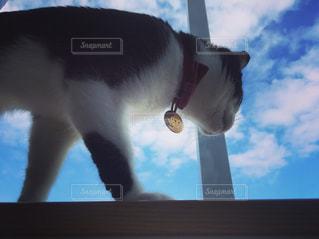 青空と猫の写真・画像素材[1154166]