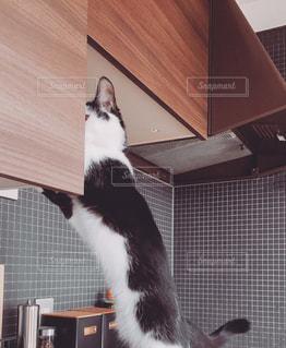 イタズラする猫の写真・画像素材[1168870]