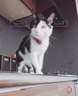 キッチンにいる猫の写真・画像素材[1168871]