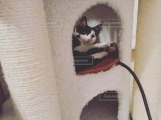 カメラを見ている猫の写真・画像素材[1168872]