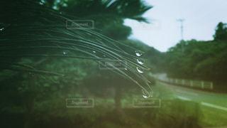 雨上がりの写真・画像素材[1241901]