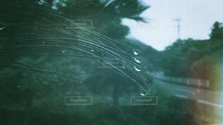 雨の雫の写真・画像素材[1241903]