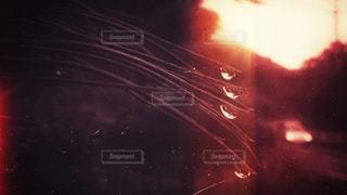 光る雨粒の写真・画像素材[1241909]