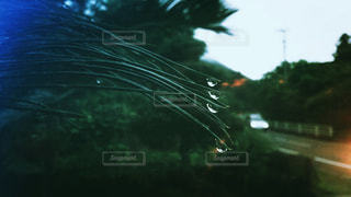 雨の雫の写真・画像素材[1250495]